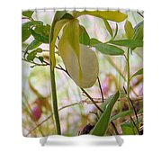 White Lady Slipper Shower Curtain