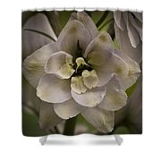 White Larkspur Close Up By Jean Noren Shower Curtain