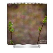 White Lilac Ready To Bloom Shower Curtain