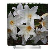 White Lilies Shower Curtain