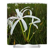White Lilies In Bloom Shower Curtain