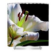 White Lilium Shower Curtain
