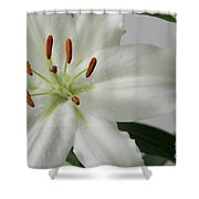White Lily 1 Shower Curtain