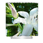 White Lily Flowers Art Prints Lilies Giclee Baslee Troutman Shower Curtain