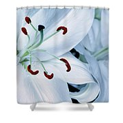 White Lily Triptych Part1 Shower Curtain
