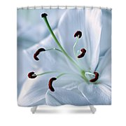 White Lily Triptych Part2 Shower Curtain