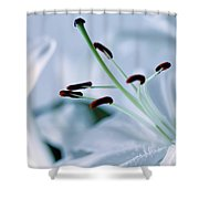 White Lily Triptych Part3 Shower Curtain