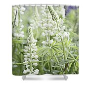 White Lupines Shower Curtain