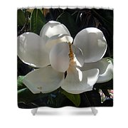 White Magnolia Flower 01 Shower Curtain