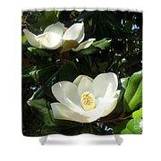White Magnolia Flowers 01 Shower Curtain