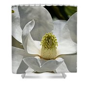 White Magnolia Macro  Shower Curtain