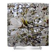 White Magnolia Shower Curtain