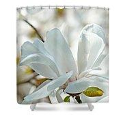 White Magnolia Tree Flower Art Prints Magnolias Baslee Troutman Shower Curtain
