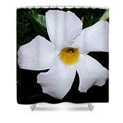 White Mandevilla Shower Curtain