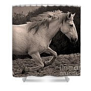 White Mare Gallops #1 -  Close Up Sepia Shower Curtain