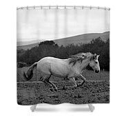 White Mare Gallops #1 - Panoramic Black And White Shower Curtain