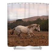White Mare Gallops #1 - Panoramic Brighter Shower Curtain