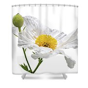 White Matilija Poppy On White Shower Curtain
