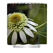 White Milkshake Coneflower Shower Curtain