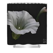 White Morning Glory Shower Curtain