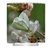 White Moth On Blossom Shower Curtain