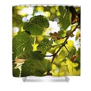 White Mulberries Shower Curtain
