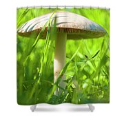 White Mushroom #2 Shower Curtain