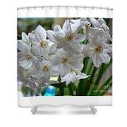 White Narcissi Spring Flower 2 Shower Curtain