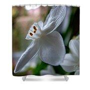 White Narcissi Spring Flower 4 Shower Curtain