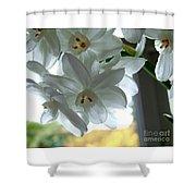 White Narcissi Spring Flower Shower Curtain