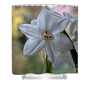 White Narcissi Spring Flowers 3 Shower Curtain