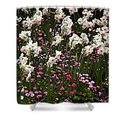White Narcissus With Pink English Daisies In A Spring Garden Shower Curtain