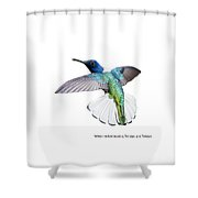 White Necked Jacobin Trinidad Shower Curtain