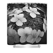 White On Black Hydrangea Petals Shower Curtain