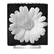 White On Wood Shower Curtain