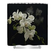 White Orchid And Reflection Shower Curtain
