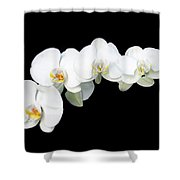 White Orchid Flower Shower Curtain