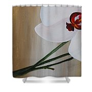 White Orchid Light Background First Section Shower Curtain