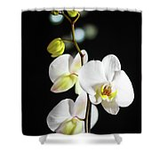 White Orchid On Black  Shower Curtain