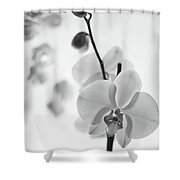 White Orchid On White Bw Shower Curtain
