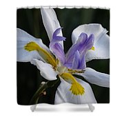 White Orchid With Yellow And Purple Shower Curtain