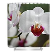 White Orchids 2 Shower Curtain