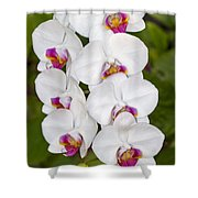 White Orchids Shower Curtain