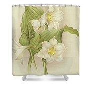 White Orchids   Eucharis Sanderiana Shower Curtain