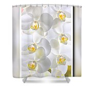White Orchids Framed Shower Curtain