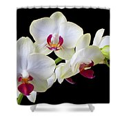 White Orchids Shower Curtain by Garry Gay