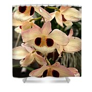 White Orchids With A Hint Of Pink Shower Curtain