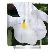 White Pansy Shower Curtain