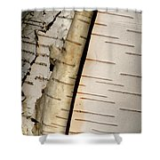 White Paper Birch Tree Bark Shower Curtain