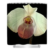 White Paphiopedium Shower Curtain